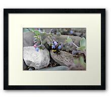 Nesten blomster og bier Framed Print
