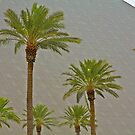 Luxor Hotel and Palms by John Butler