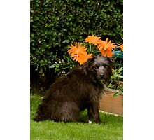Bailey - The Patterdale Terrier (Fell Terrie) II Photographic Print
