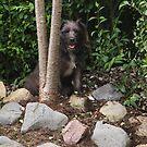 Bailey - The Patterdale (Fell Terrier) III by Chris Clark
