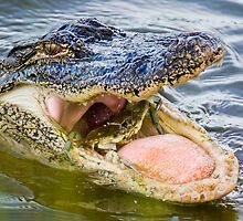 Gator Eating Crab by clizzul