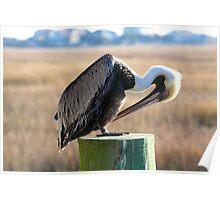 Marshwalk Pelican II Poster