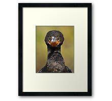 Cormorant Attitude Framed Print