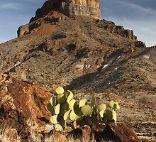 Cerro Castellan at Sunset by William C. Gladish