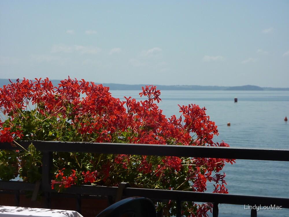 Geraniums Lake View - Trattoria del Moro by LindyLouMac