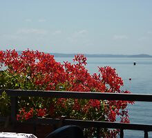 Geraniums Lake View - Trattoria del Moro by LindyLouMac