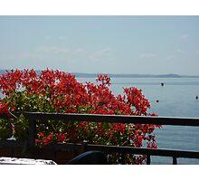 Geraniums Lake View - Trattoria del Moro Photographic Print