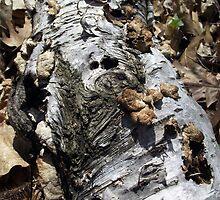 Fallen Birch by Brenda Hagenson