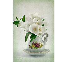 White Godetia Flowers Photographic Print