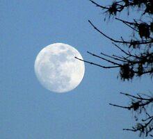 Full Moon Rising by Brenda Hagenson