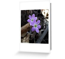 Spring Wildflower Greeting Card