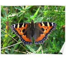 The Small Tortoiseshell Poster