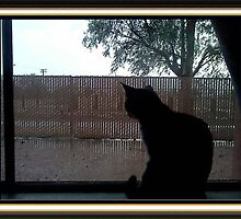 silhouette of my Cat by William Baldwin