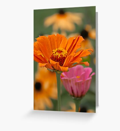 Colors of Summer Greeting Card