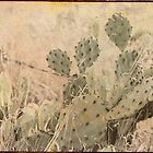 Native Cactus by Angi Allen
