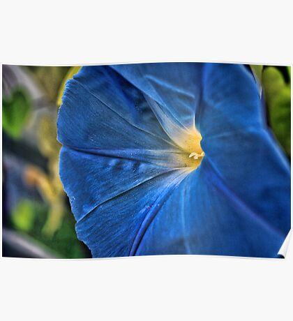 Heavanly Blue Morning Glory  Poster