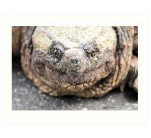 Alligator Snapping Turtle (Closeup) Art Print