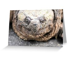 Alligator Snapping Turtle (Closeup) Greeting Card