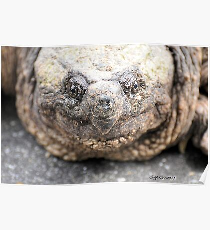 Alligator Snapping Turtle (Closeup) Poster