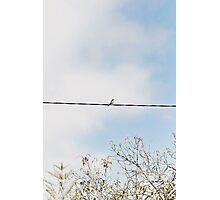 Chirpy lill fellow Photographic Print