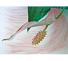 Peace Lily Stamen and Leaf Photographic Print