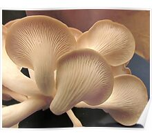 Oyster Mushrooms Poster