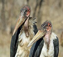 Pretty ugly birds! by jozi1