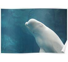 Beluga Poster