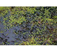 Swamp Frog Photographic Print