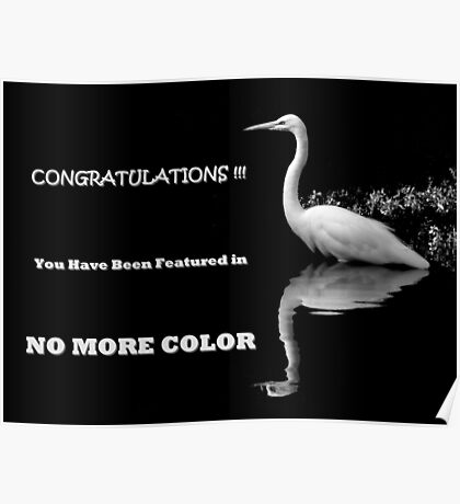 FEATURED BANNER NO MORE COLOR Poster