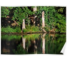 Three Tree Reflections  Poster