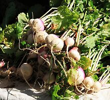 Garden Turnips by B.L. Thorvilson