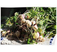 Garden Turnips Poster