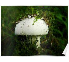 Undercover Mushroom Poster