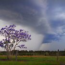 Jacaranda Storms by Penny Kittel