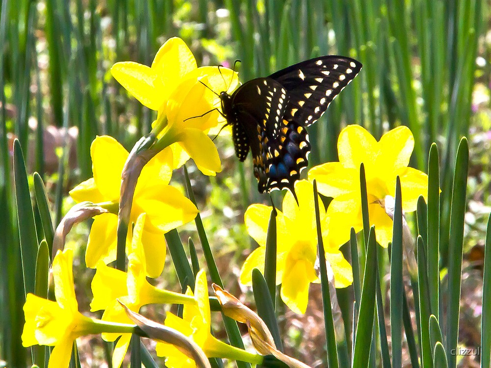 Monarch and Daffodils by clizzul