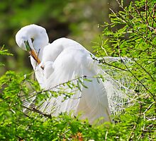 Pruning Egret by clizzul