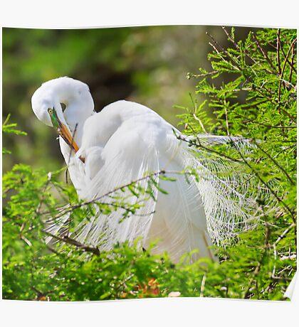 Pruning Egret Poster