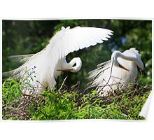 Two Egrets Poster
