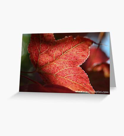 Liquidambar Leaf Greeting Card