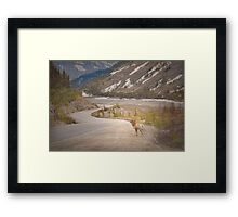 Along the Icefields Parkway Framed Print
