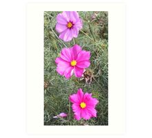 flowers from Norton Priory walled garden Art Print