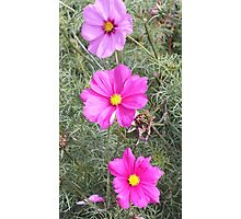 flowers from Norton Priory walled garden Photographic Print