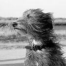 windswept by marc melander