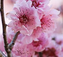 Spring Is In  The Air by Evita