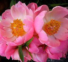 Peonies by Ladydi