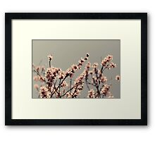 Blossoms... Framed Print