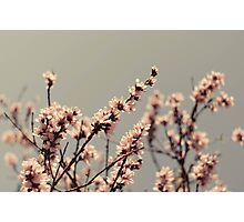 Blossoms... Photographic Print