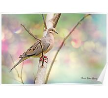 Peaceful Mourning Dove Poster