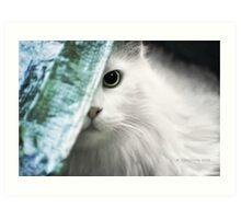 Beware of Cat Art Print